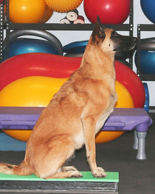 Canine Conditioning Image.jpg