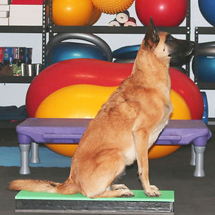 Canine Conditioning Foundations