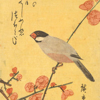"""""""Java Sparrow and Red Plum"""" (3 sessions)"""