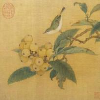 """Bird on Loquat"" (5 sessions)"