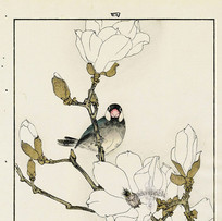 """White Magnolia, Java Sparrow"" by Imao Kei (3 sessions)"