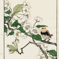 """""""Red Robin, Pear Blossom"""" by Imao Keinen (4 sessions)"""