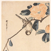 """""""Great Tit and Camellia"""" by Utagawa Hiroshige (4 sessions)"""
