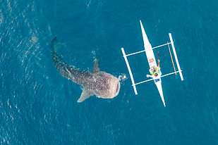 autonomous feeder boat.jpg