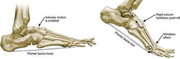 Foot and ankle biomechnics, windlas mechanism