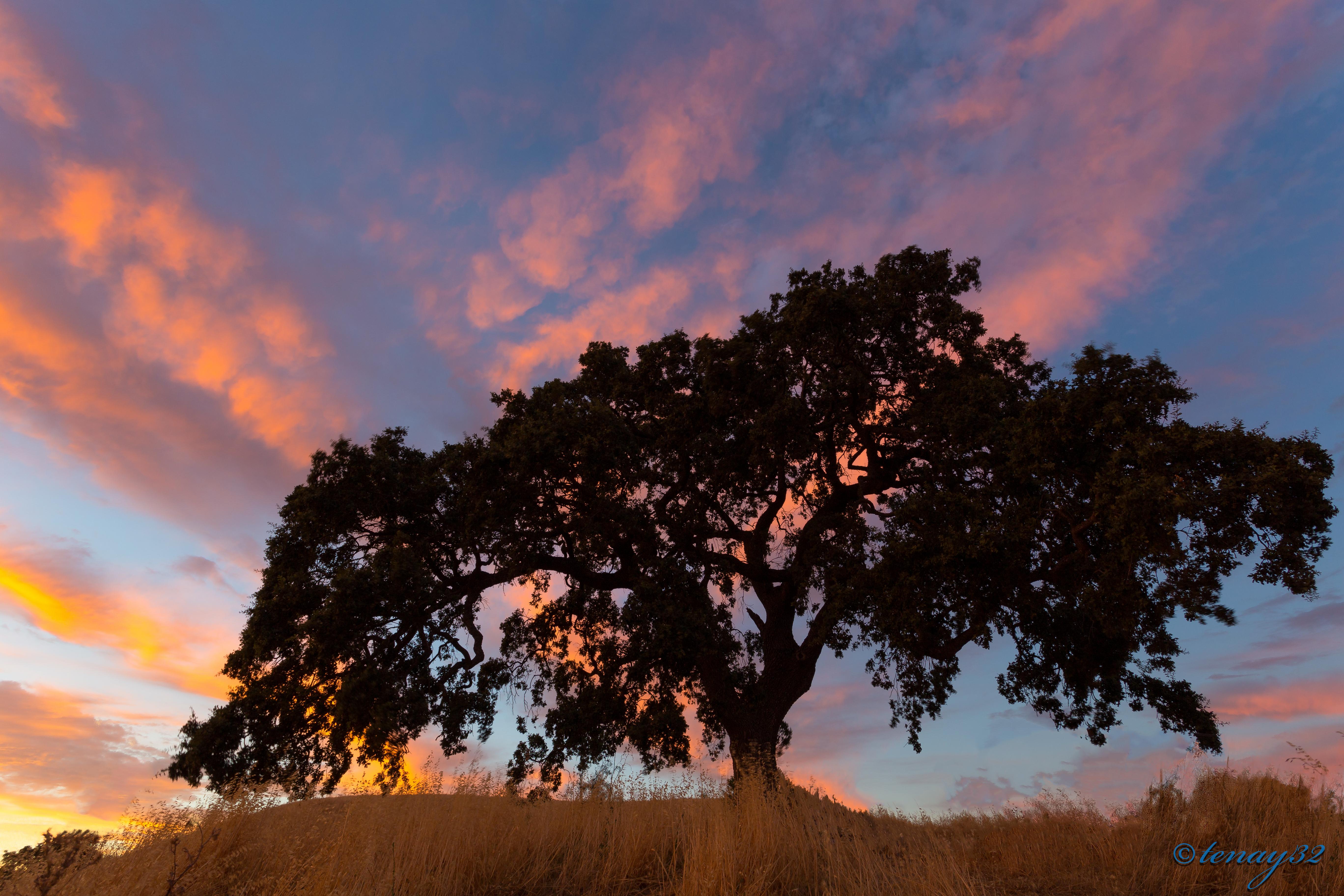 pena adobe, vacaville, california