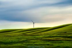 Birds Landing Windmills
