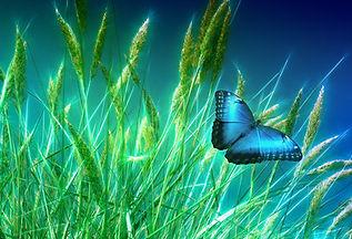 grass-1058118_1920.jpg