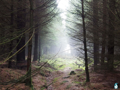 Misting Forest