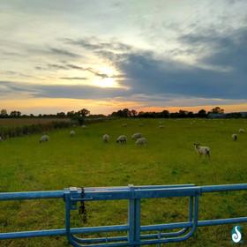 Sheep Season