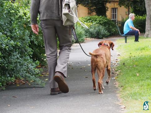 Working Walk