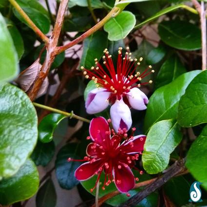 New Zealand Flowers