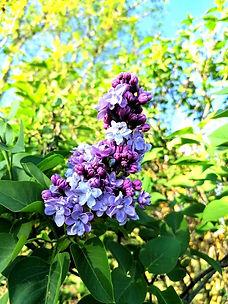 fleurs-gite-vacances-masdagenais.alt.jpg