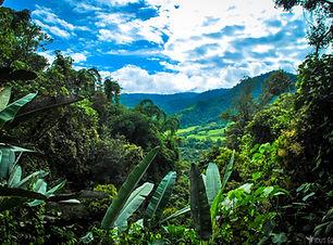 paysages-jungle-tout-equateur.jpg