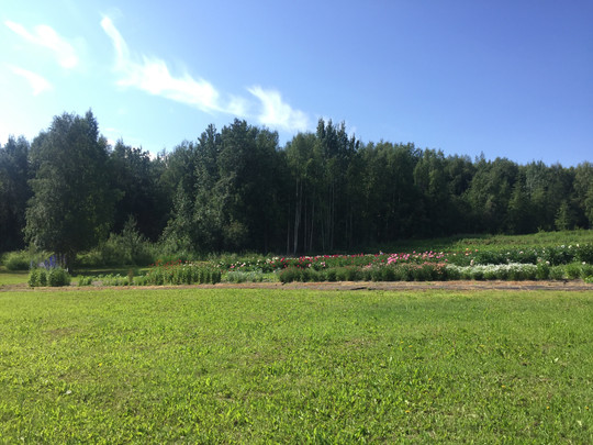 The Field in July, 2018