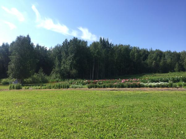 The Field in July, 2018