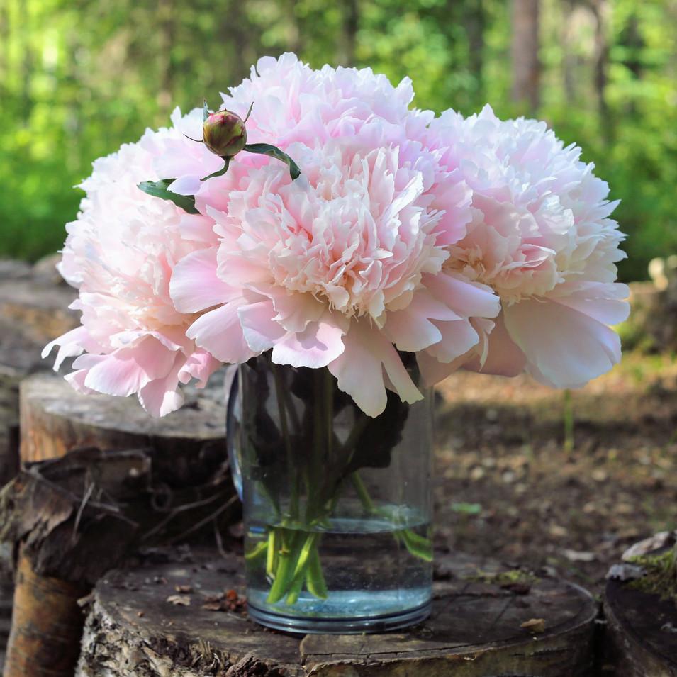 Sarah Bernhardt Peony Bouquet