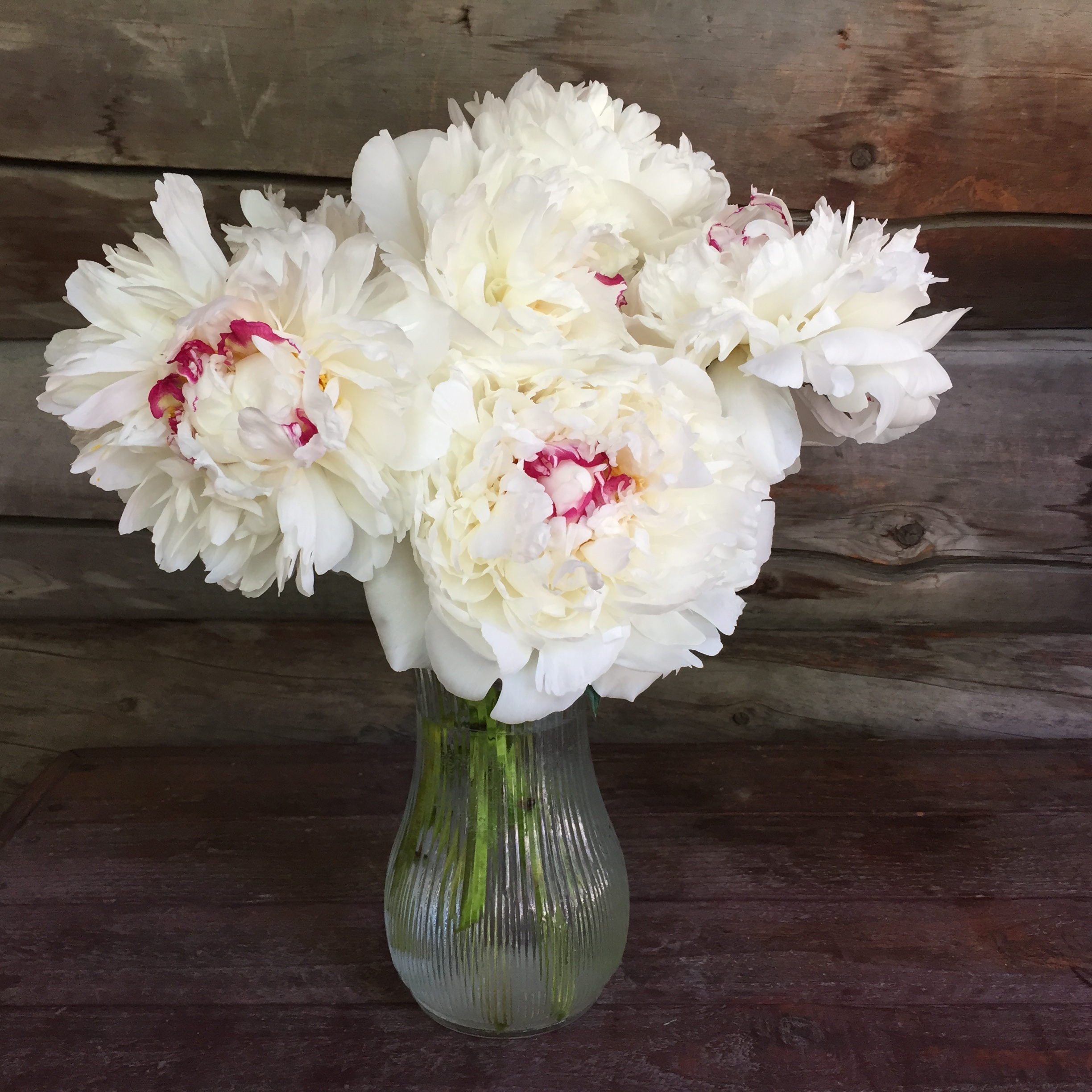 A Bouquet of Festiva Maxima Peonies