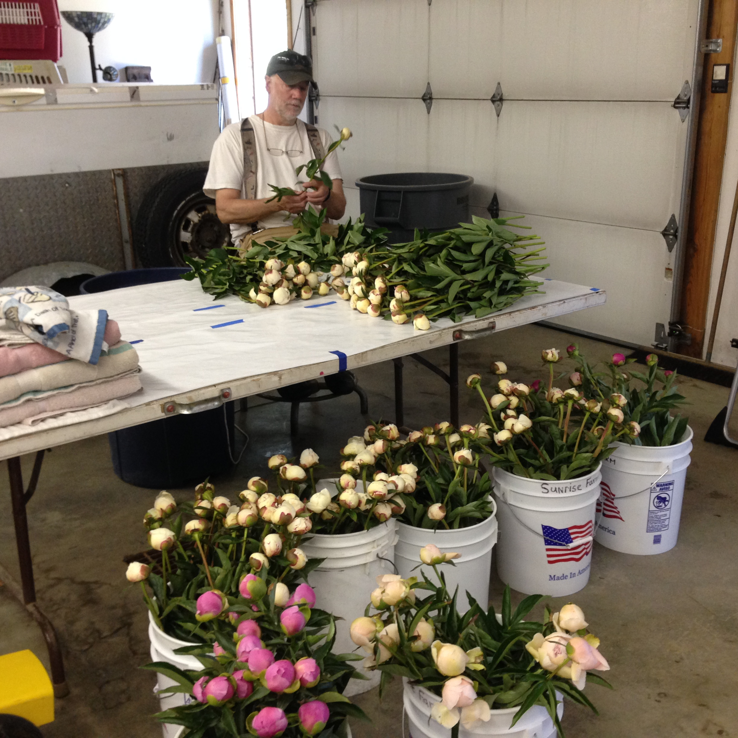 Processing and Grading Peony Stems