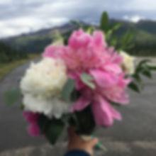 Alaska Peony Flowers in Denali, AK