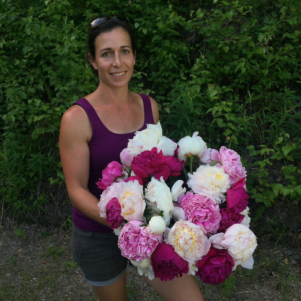 A variety of peonies available from Alaska Peony Flowers