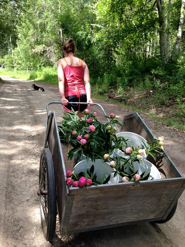 Naomi Hauling Peonies to the Chiller