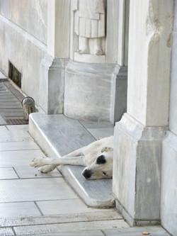 B&W dog near the Acropolis