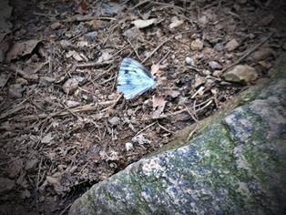 날개 다친 나비