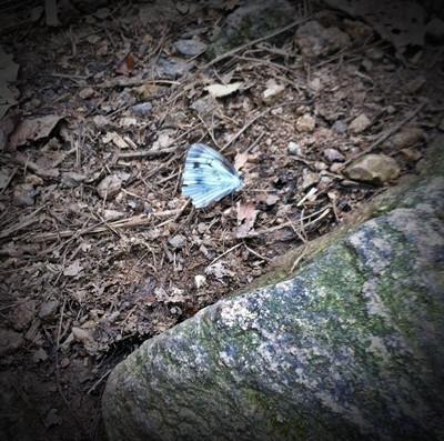 004  날개 다친 나비.JPG