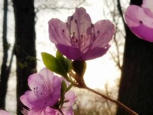 봄 그리고 제주..