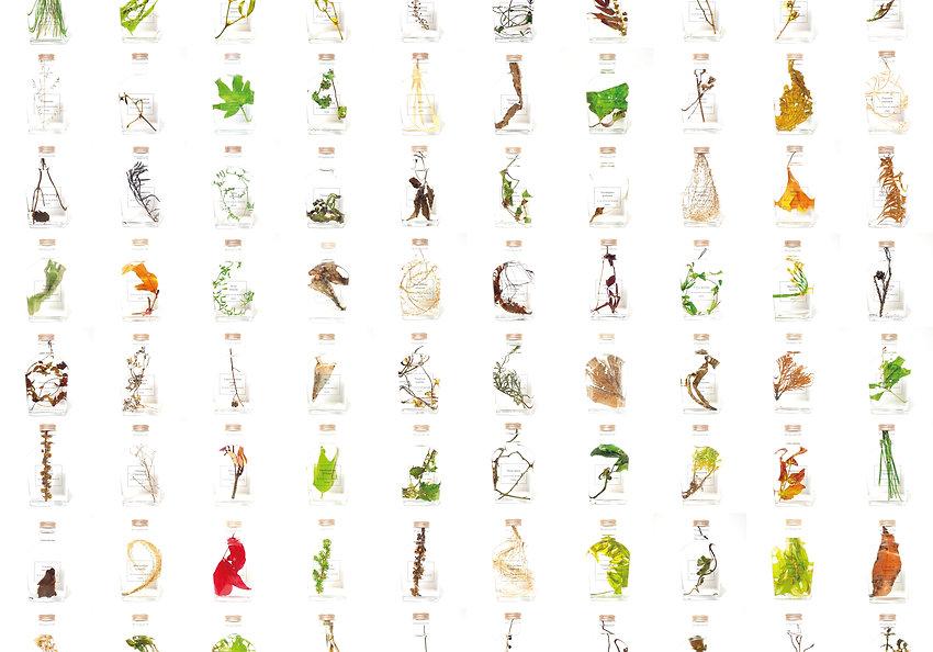 植物片一覧.jpg