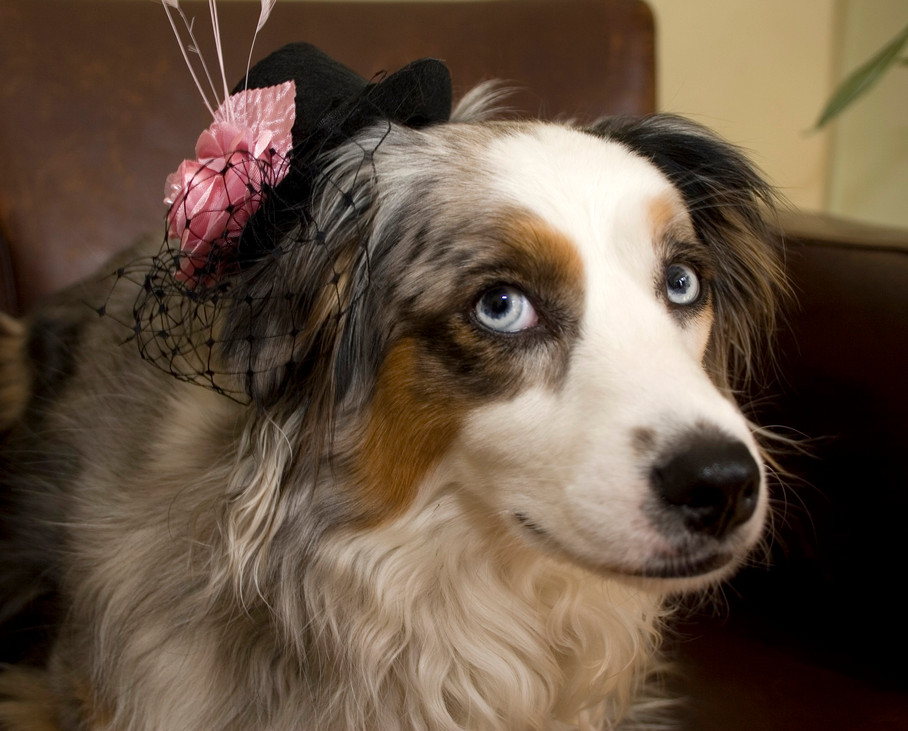 My favourite movie is Lassie