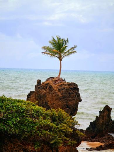 Praia de Tambaba, Paraíba