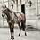 TAPIS DE SELLE VELVET PARME - KENTUCKY HORSEWEAR
