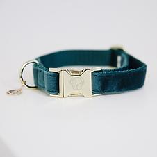 Collier pour Chien Velvet Émeraude - Kentucky Dogwear