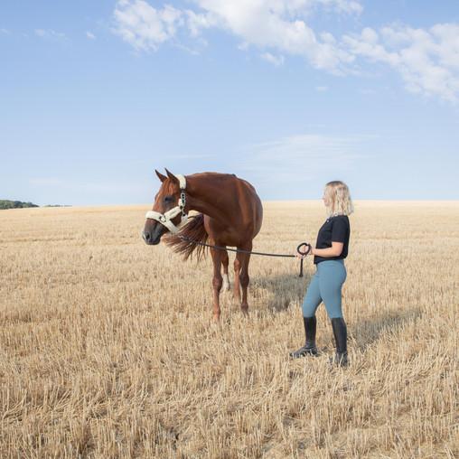 Comment protéger votre cheval de la chaleur en été ?