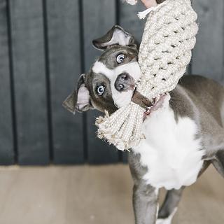 JOUET POUR CHIEN CORDE COTON ANANAS - KENTUCKY DOGWEAR
