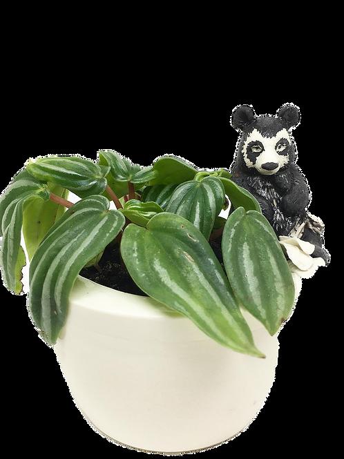 Spectacled Bear Planter