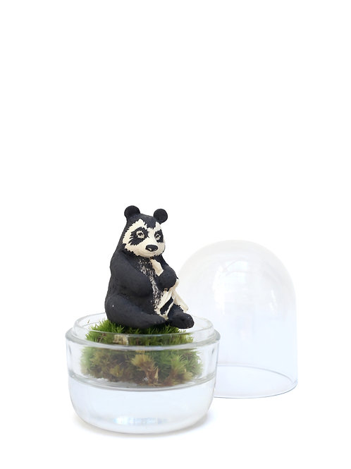 Spectacled Bear Dome