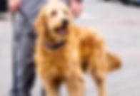 Drug Detection Canine Services