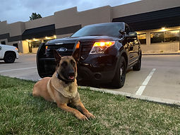 Explosives Detection Canine Services