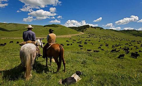 bétail Eleveurs