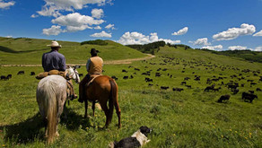 The Best Dude Ranch Vacations Near Los Angeles That Are Open Now!