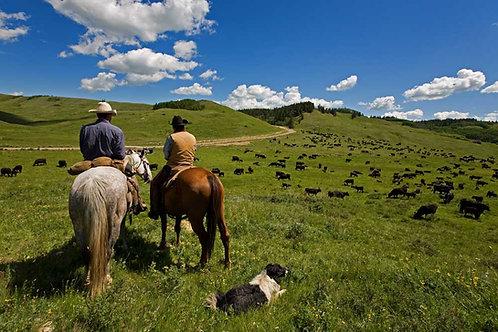Economy Irrigated Pasture Mix