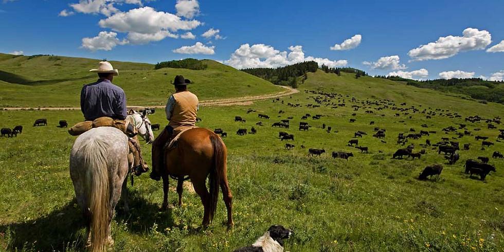 Southwest Cattle Dog Trials Finals