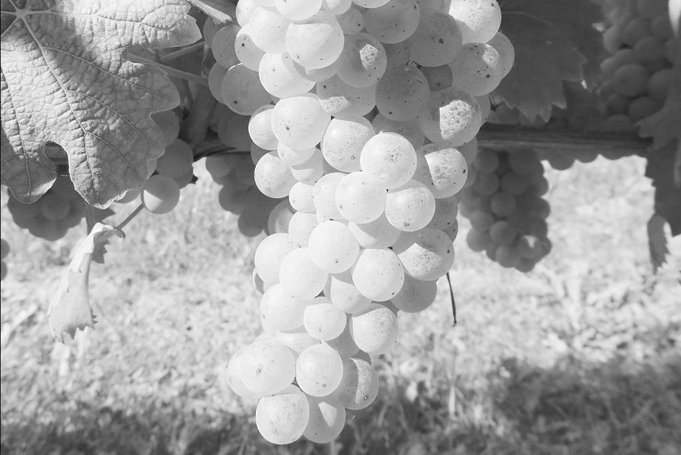 thumb-Grappolo-di-Arneis-1024x683_edited