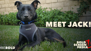 Be Bold: Meet Jack!