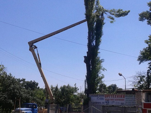 Щоб не ставали вбивцями дерева