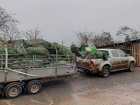 Christmas Tree Deliveries_edited.jpg