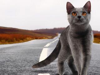 Blockchain, virtual goods and £80,000 cartoon cats: The strange world of CryptoKitties